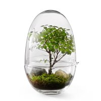 Grow XL bonsai Design House Stockholm - Northmans